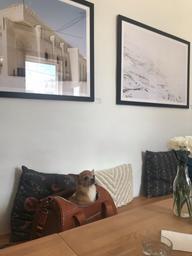 Beau décor, bon Smoothie mais mauvais point pour mon petit chien qui ne pouvait pas rester...