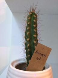 I love the books for sale and these named Cacti and succulents.  Who wouldn't want a cactus named Emilien?