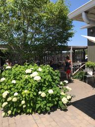 Belle terrasse et excellent café!